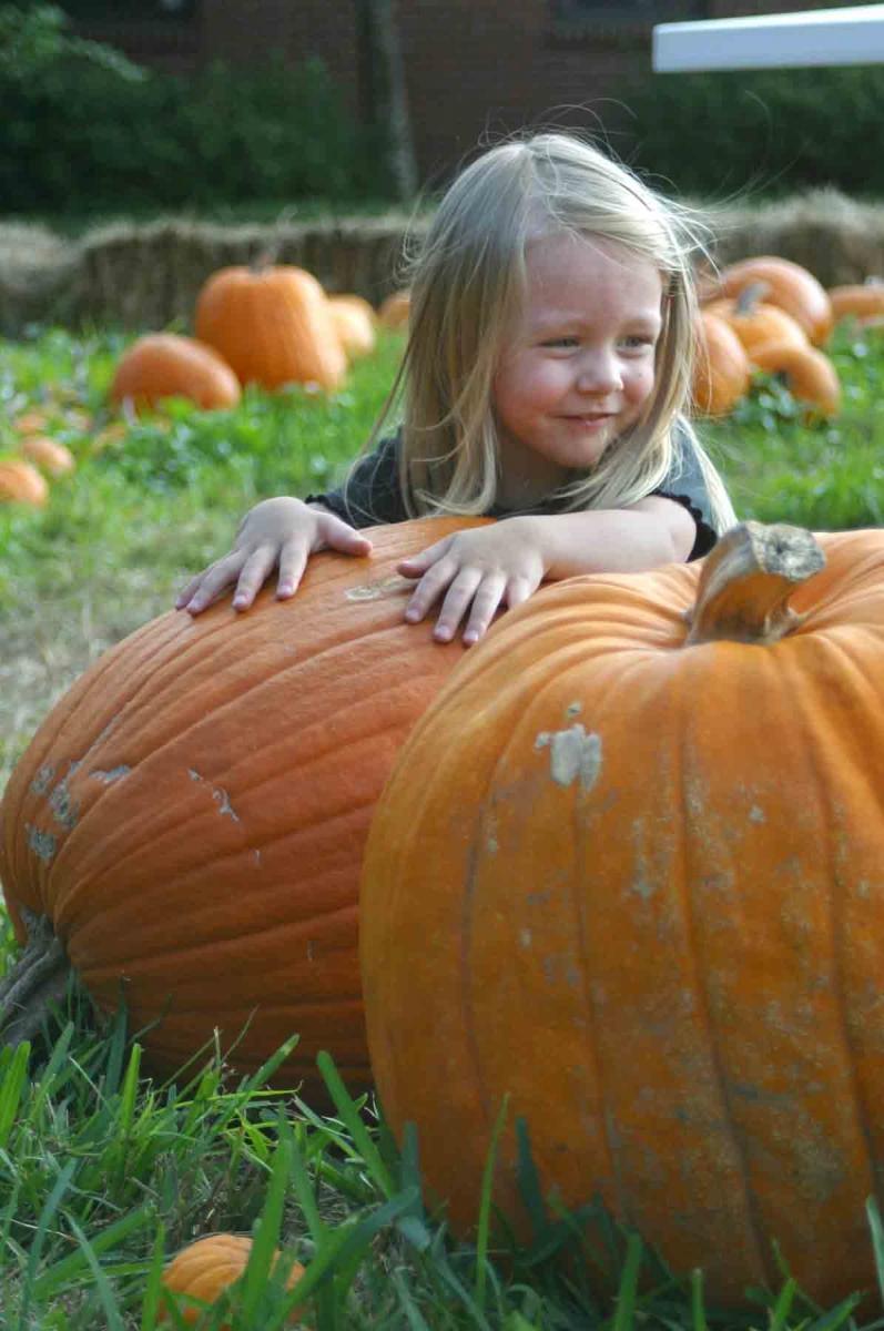 """""""A great pumpkin"""""""